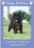 "Cairn Terrier-Happy Birthday - ""I'm Just Like You"" Theme"